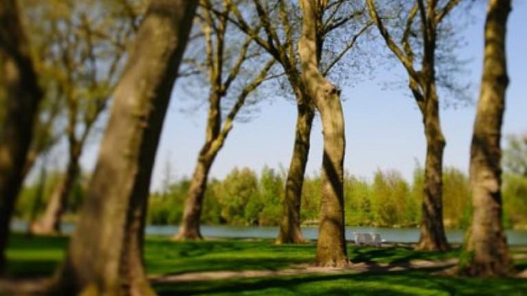 Bois de seine ville de bray sur seine - Piscine bois de reves asnieres sur seine ...